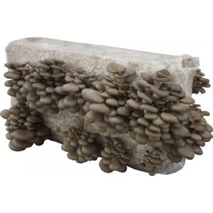hliva-ustricna-substrat-15-kg